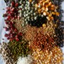 Polish trade company P.W. MDM wants to offer diffrent type of grains both human and animal consumption